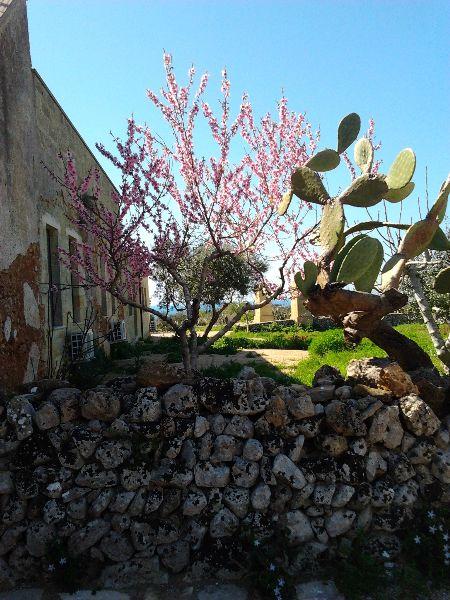 Vegetazione Masseria Ficazzana Pescoluse, Lecce