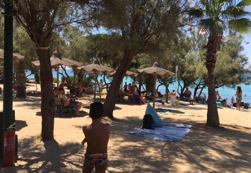 Spiaggia e pineta camping