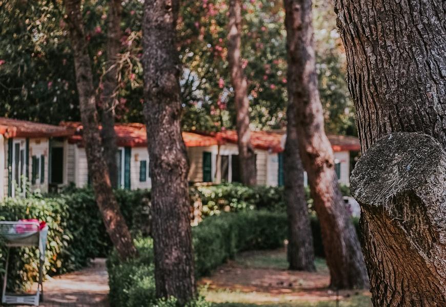 casa mobile cigno