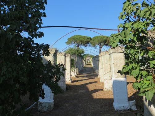 Agriturismo Occhineri Campi Salentina