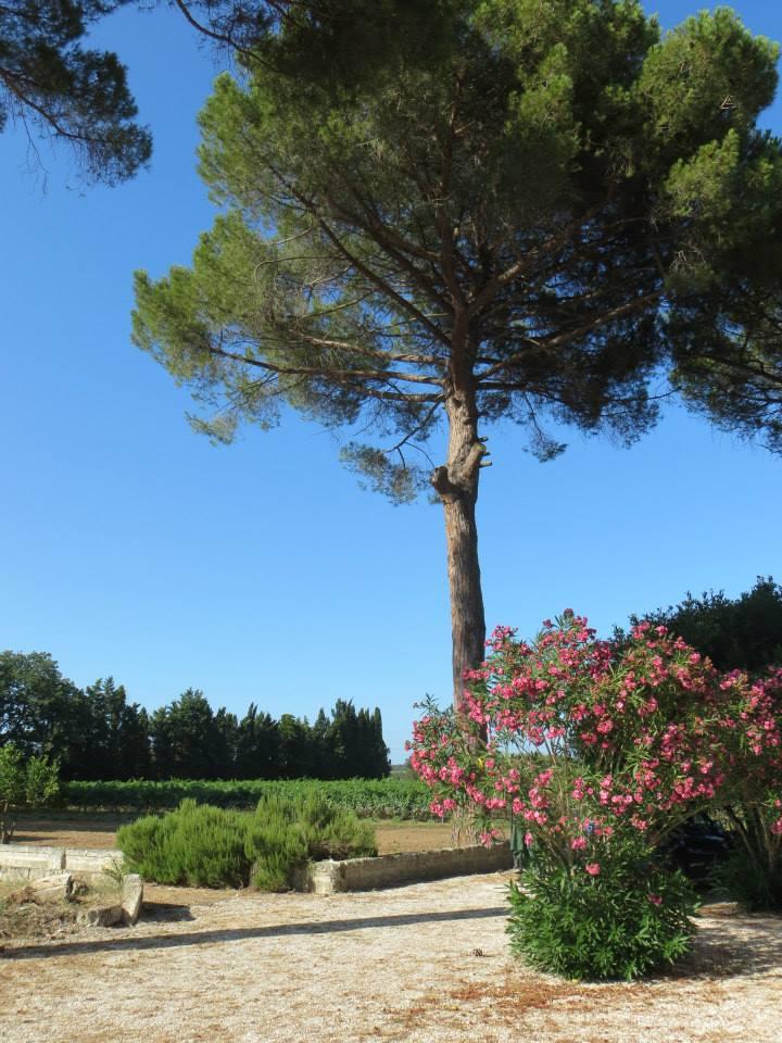 vacanze nel verde a Campi salentina (Lecce)