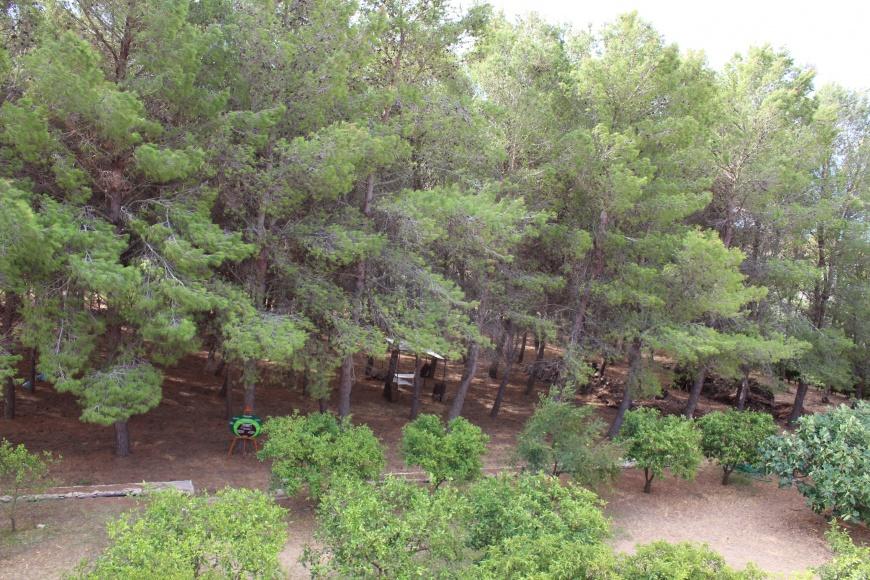 vista dal tetto - pineta