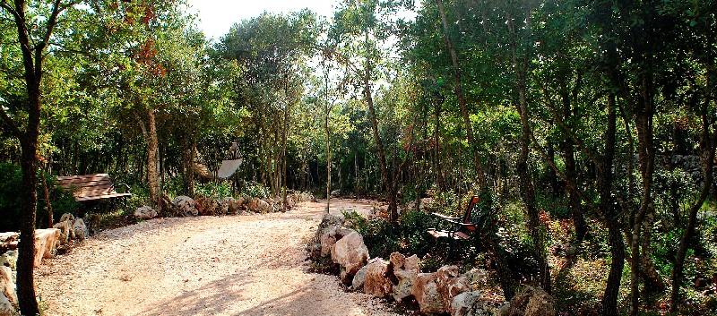 Area Pineta riservata alla masseria Chiancone Torricella Martina Franca