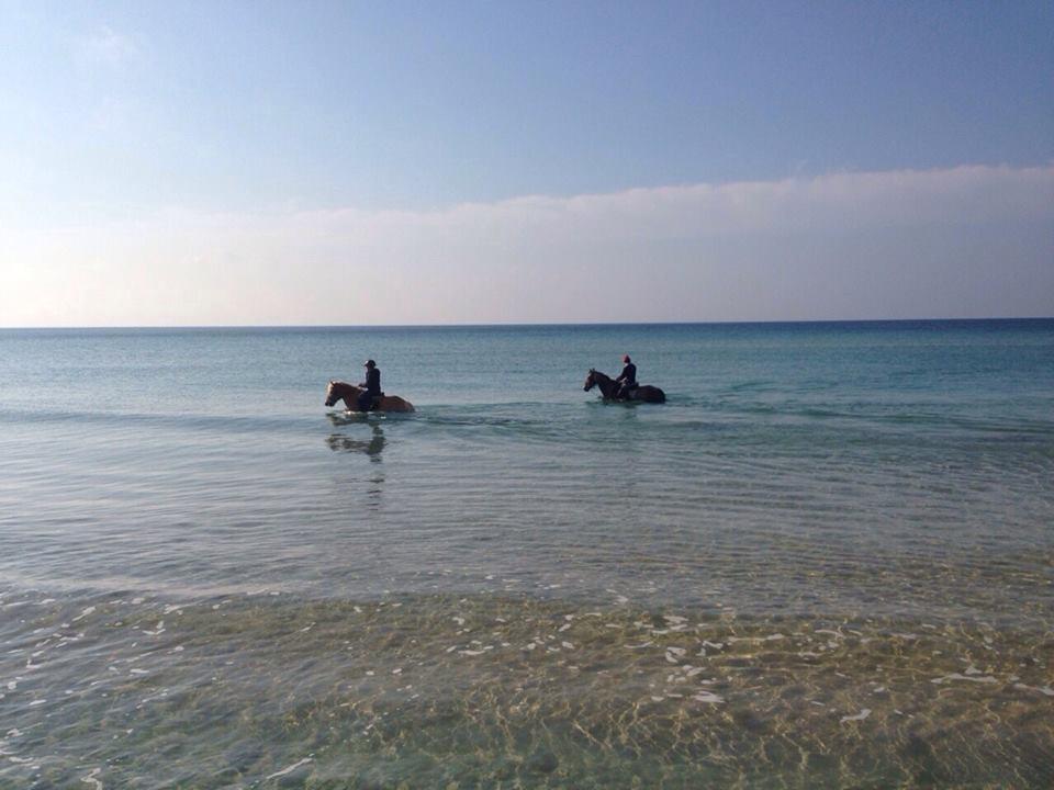 passeggiate a cavallo al mare nel Salento